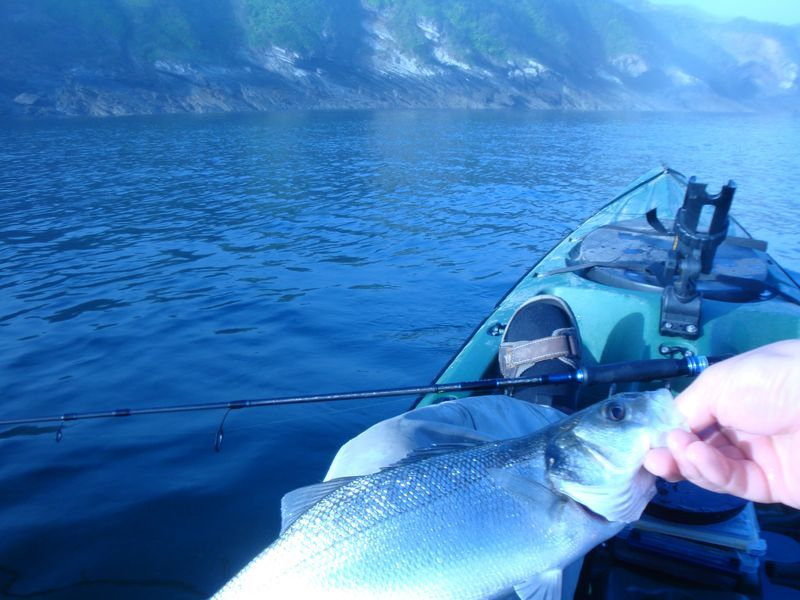 Pagaie Barre Phoque BLUE ARROW XL